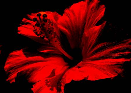 framed-print-large-14x10-red-flower by wavian