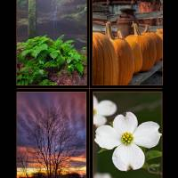 Ohio Seasons Four Image Poster Print by Jim Crotty