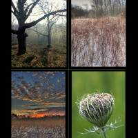 Sugarcreek MetroPark Four Image Poster Print by Jim Crotty