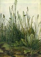 The Tall Grass