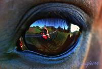 Horses eye - reflected