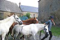 Horses in Normandy