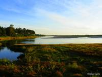 Ogunquit Marsh