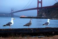 Three Gulls In A row