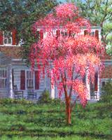 Weeping Cherry by the Veranda