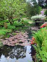 Pond with Lily-Pads, Japanese Gardens