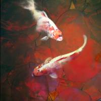"""Autumn Koi"" by vincent-field_photography"