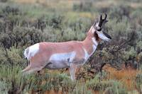 Pronghorn #1, Madison County, Montana