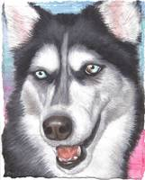 DOG - Siberian Husky upright