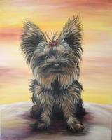 DOG - Yorkshire Terrier
