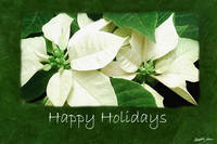 White Poinsettias 1 - Happy Holidays
