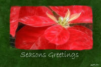 Mottled Red Poinsettias 1 - Seasons Greetings