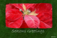 Mottled Red Poinsettias 2 - Seasons Greetings