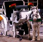central park carriage