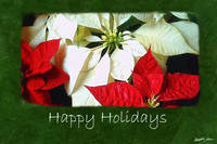 Mixed Color Poinsettias 2 - Happy Holidays