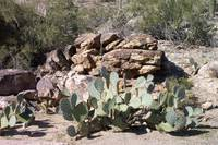 Cacti Convention by Wendy Ritch