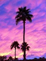 Scottsdale Sky by Wendy Ritch