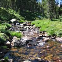 Mountain Stream by Eileen Ringwald