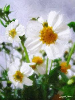 Little White Wildflowers 1