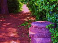 A tree lined path - Scavi Ostia Antica