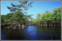 Finch Lake, Edwards Creek, Upper Ouachita NWR