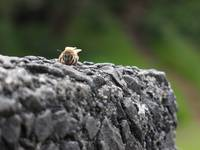 Chilling Bee