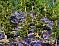 Trees in Granite Hillside