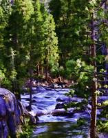 River Saint Stanislaus Forest