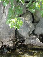 A tree and rocks