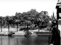 Palm trees on the banks of the Yarra River