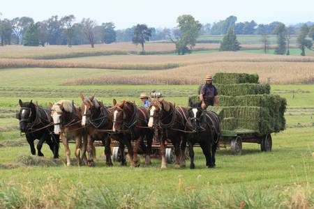 Baling the Hay by Lou Ford