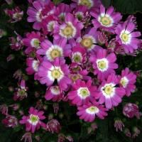 *New Flower #2 by Patricia Schnepf