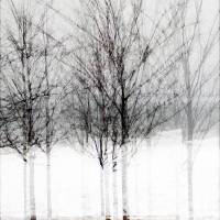 Winter by Patricia Schnepf