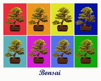 Bonsai x8 (Titled)