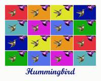 Hummingbird x16 (Titled)
