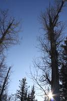 Leafless Trees, Crisp Winter Day