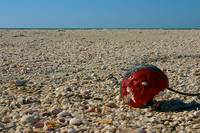 Red Float on Shells