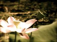 Dragonfly on Lotus Flower Antique
