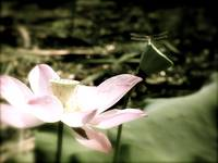Dragonfly on Lotus Flower Antique 2