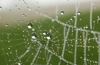 Early morning web  (Rutland Water)