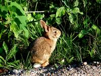 Baby Bunny_PhotoContest-TNC09
