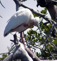 Snowy Egret_PhotoContest-TNC09