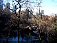 Christmas Day In Central Park, New York