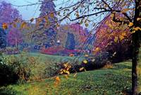 College Garden in Autumn, Cambridge, England by Priscilla Turner