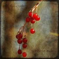 Fruits of Winter - High bush-cranberry
