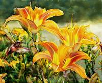Orange Lillies and Humming bird