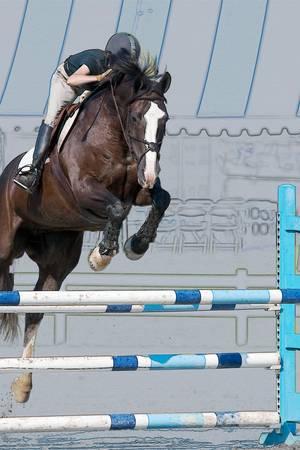 Horse Show Jumper-4