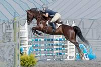 Horse Show Jumper-8 by Daniel Teetor