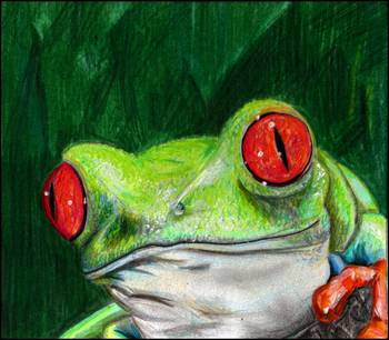 Red Eye Tree Frog by artist Gary Scarisbrick. Giclee prints, art prints, animal art, Fine art print
