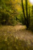 Fort Brockhurst Walk. Plastic Optic, f/4, Lensbaby